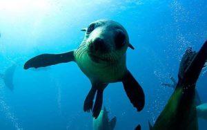 narooma snorkeling