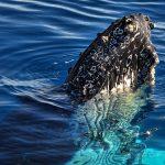 whale narooma
