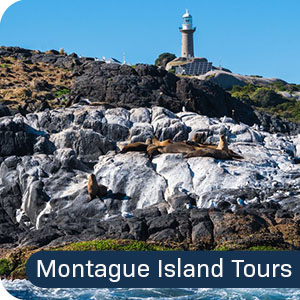 Narooma Montague Island Tour