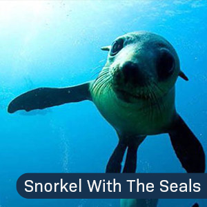 Narooma Snorkel with the Seals