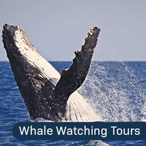 Whale Watching Tour Narooma