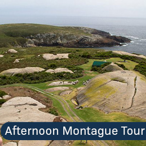 Afternoon Montague Island Tour