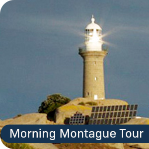 Morning Montague Island Tour