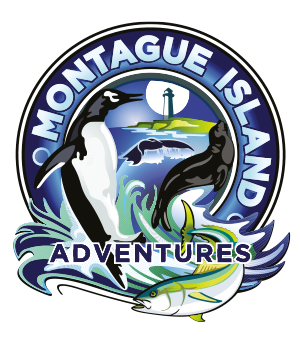 Montague Island Adventures