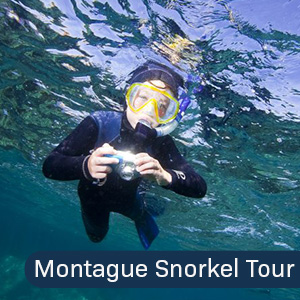 Snorkel with the Seals Montague Island