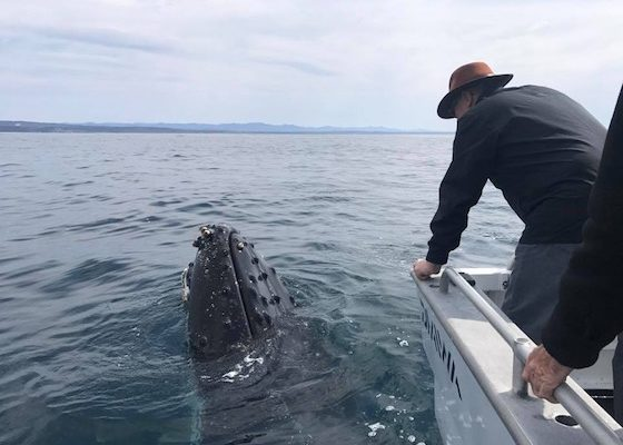 narooma fishing charter whale watching tour