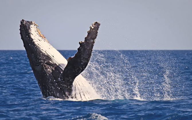 narooma whale watching