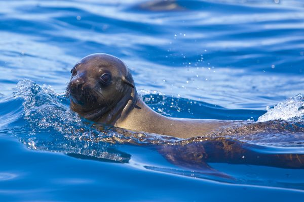 seal photo new2